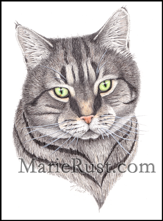 cat-commission