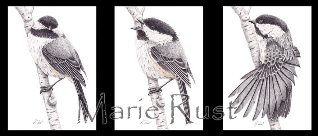 chickadee-triptych-big