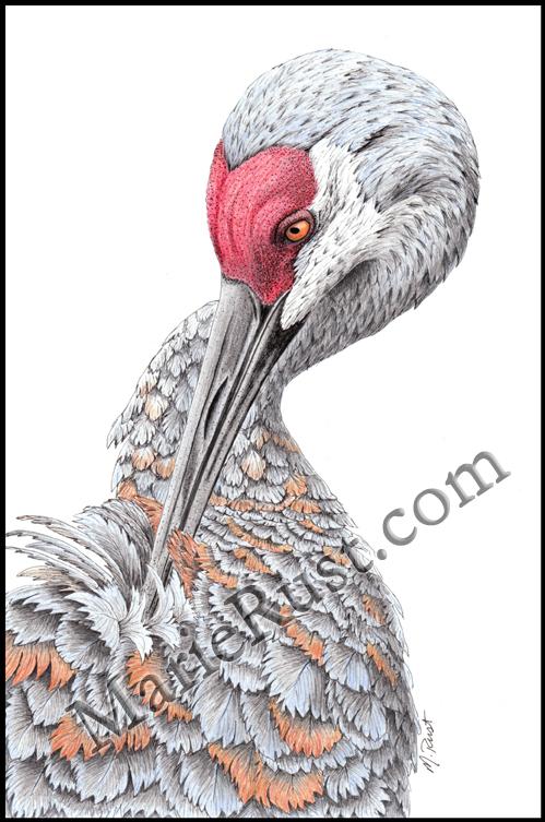Heathers-crane