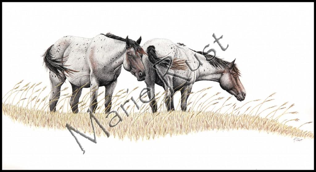 wild-horses-big