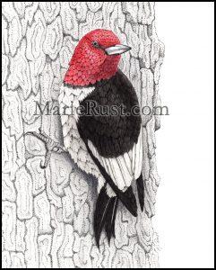 red-headed-woodpecker2