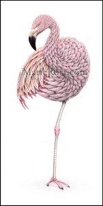 Chilean-flamingo