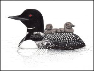 common-loons