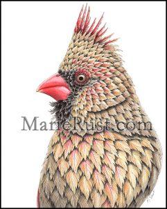 female-cardinal009